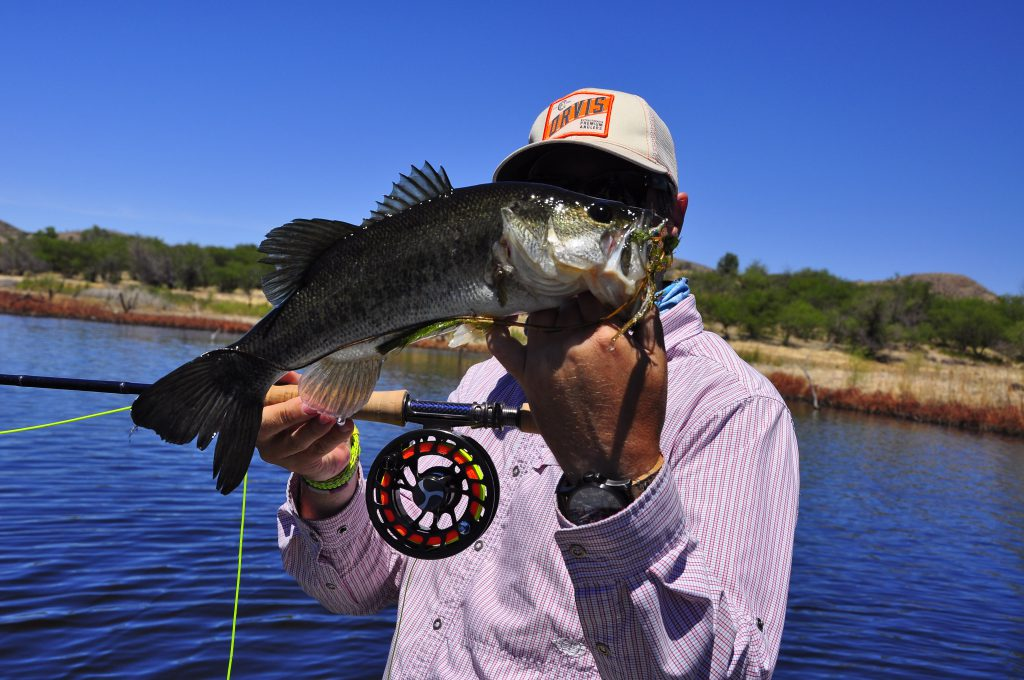 Arizona bass fly fishing wing shooting adventures for Fly fishing for largemouth bass