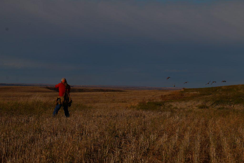 Covey Rise _Saskatchewan Upland Bird Hunting