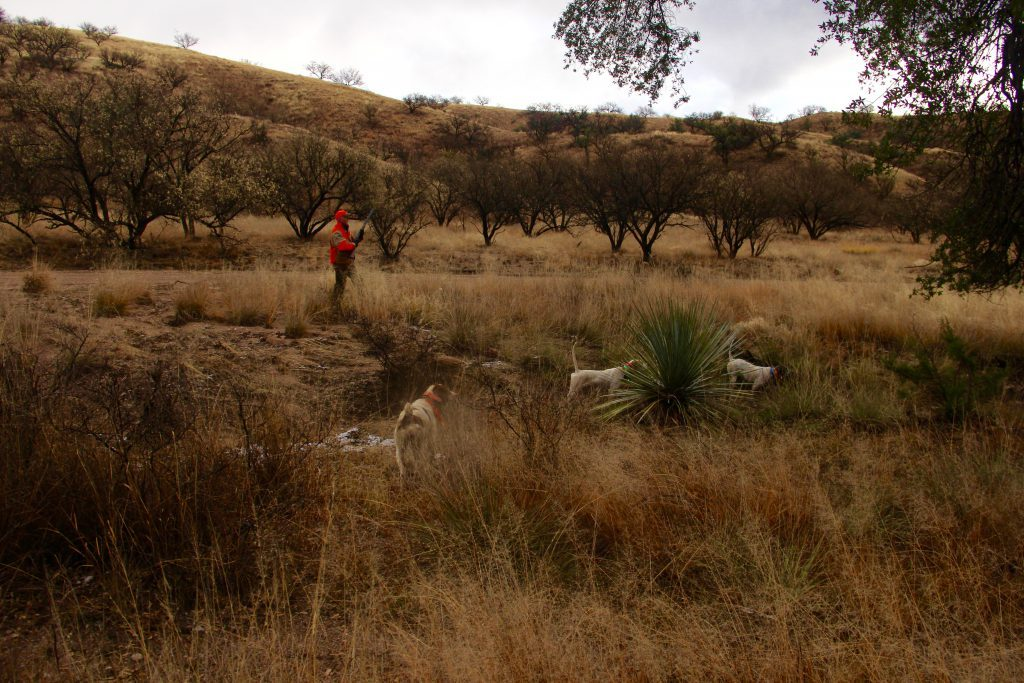 Kate & Crush back Chica on a Mearns Quail Find