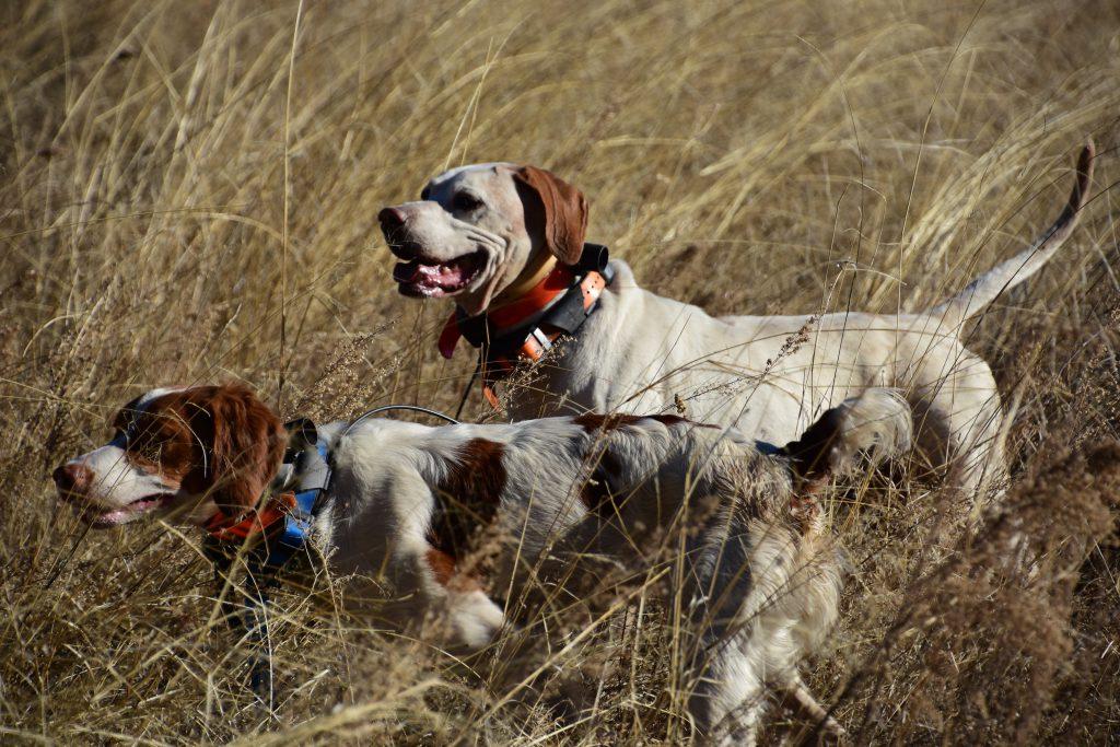 Kate and Buddy -Arizona Quail Hunting