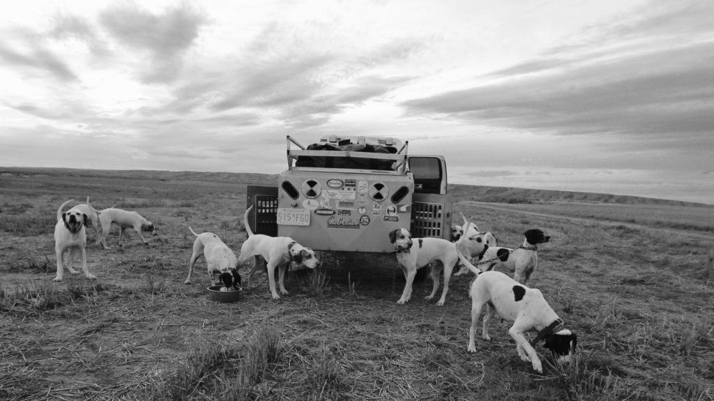 The Dog Team