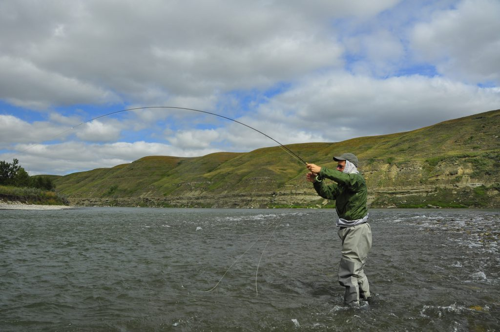 a fly fisherman catches a trout on alberta bow river on a guided flyfishing trip