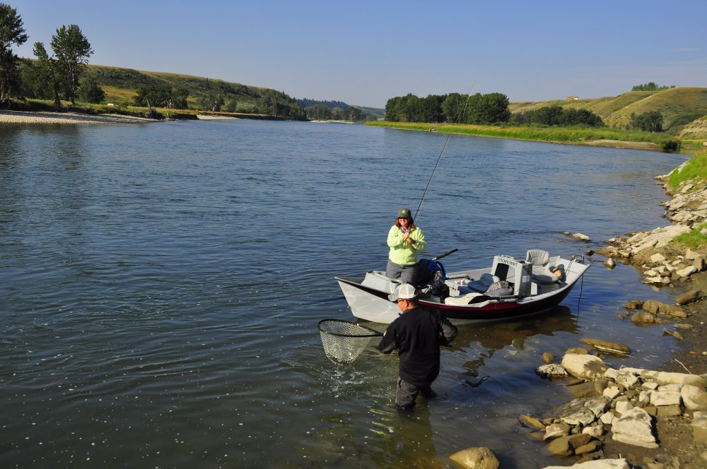 Flyfishing the bow river on a guided fishing trip
