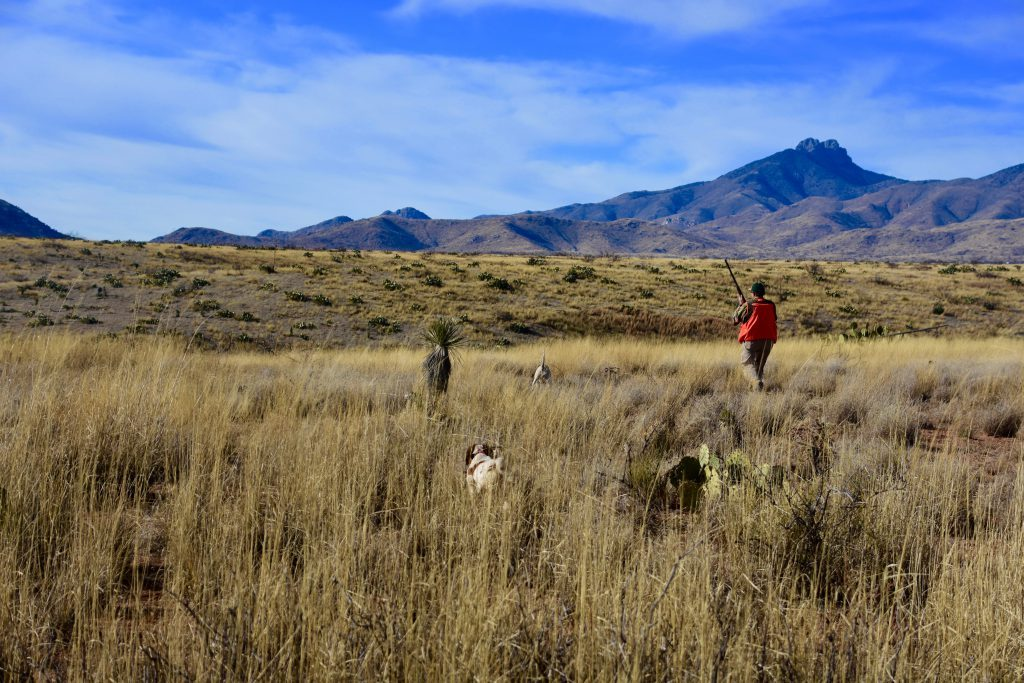 Desert Quail Hunting with pointing dogs in arizona