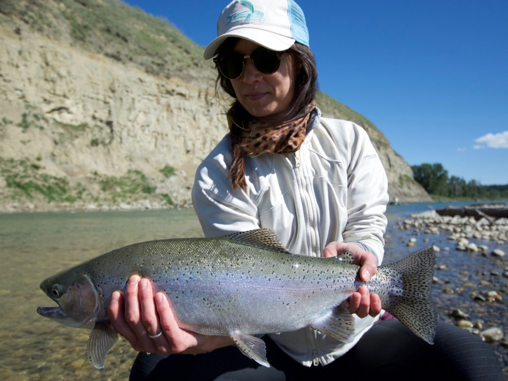 a large bow river rainbow trout caught on a guided bow river flyfishing trip