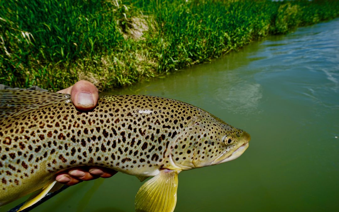 Fly-Fishing Report July 17