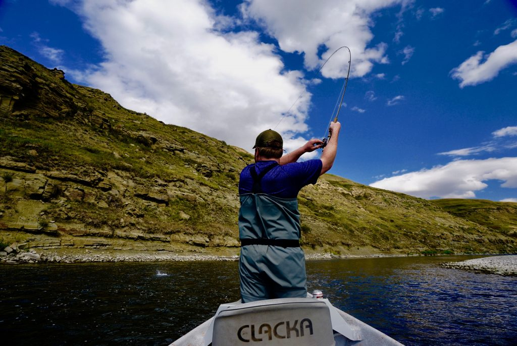 client hooks a trout on a guided bow river fly fishing trip