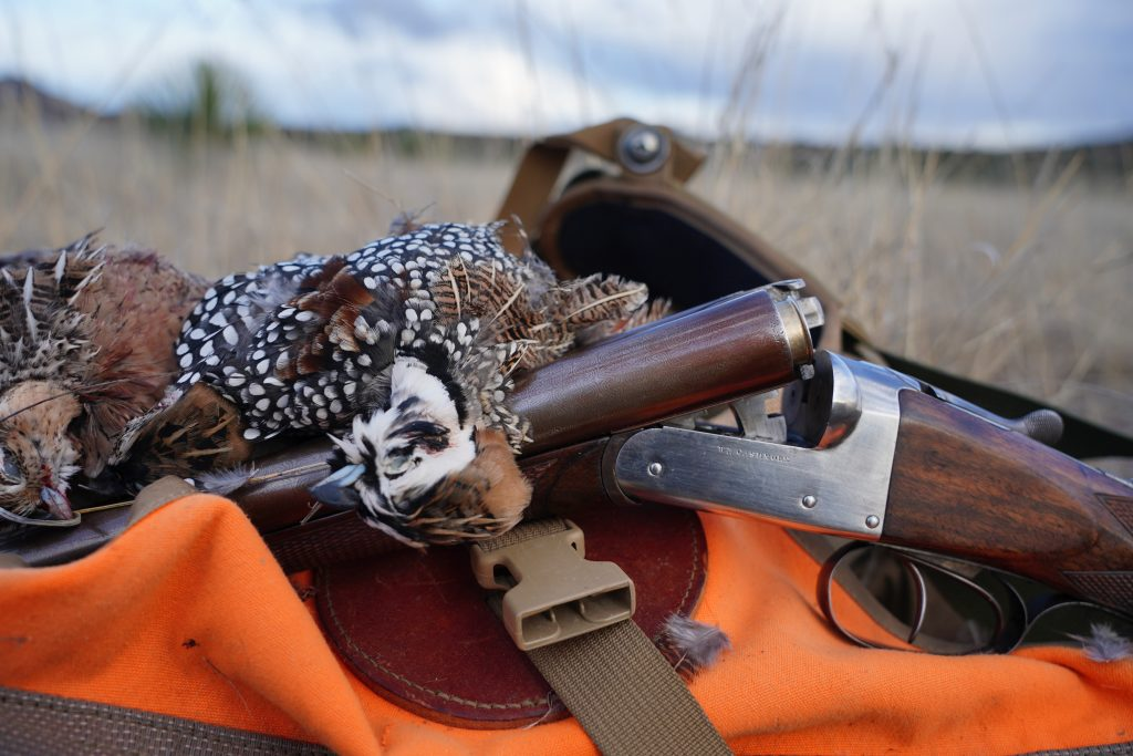 Arizona Mearns Quail and an old Shotgun