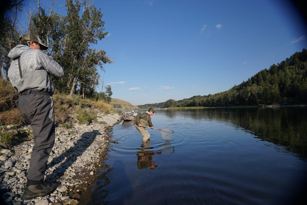 a bow river fly fishing guides nets a rainbow trout on a guided fly fishing trip