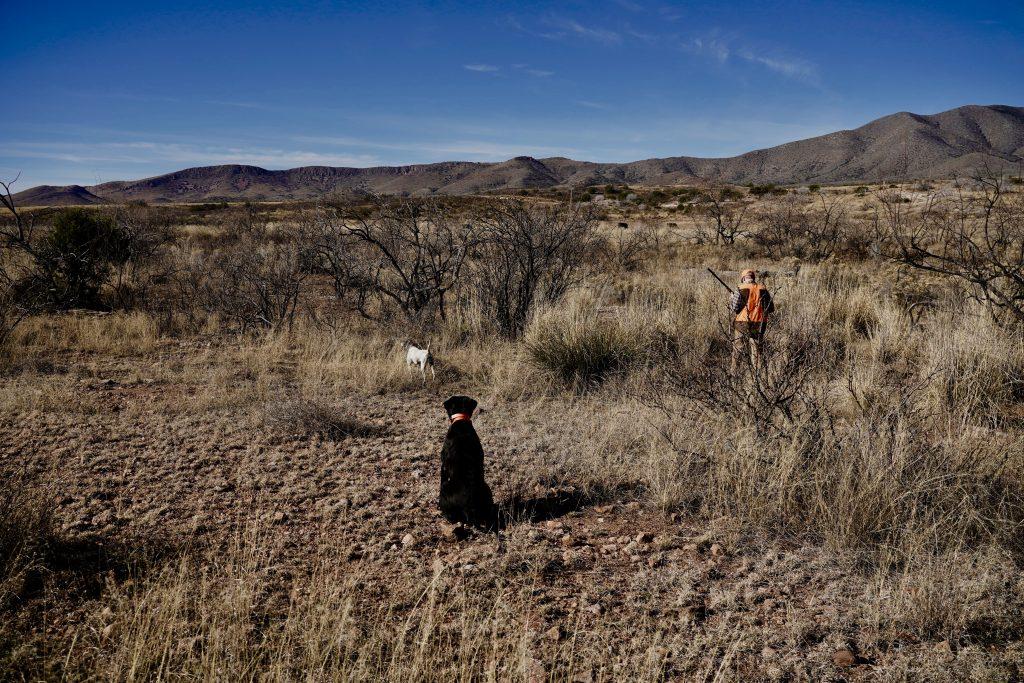 Scaled Quail Hunting in Arizona