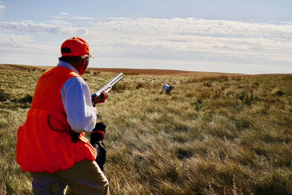 a hunter covers a point on Saskatchewan Sharptail Grouse