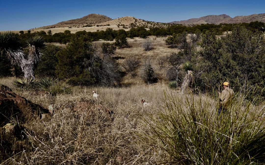 Arizona Mearns Quail Hunting  -Do's and Don'ts