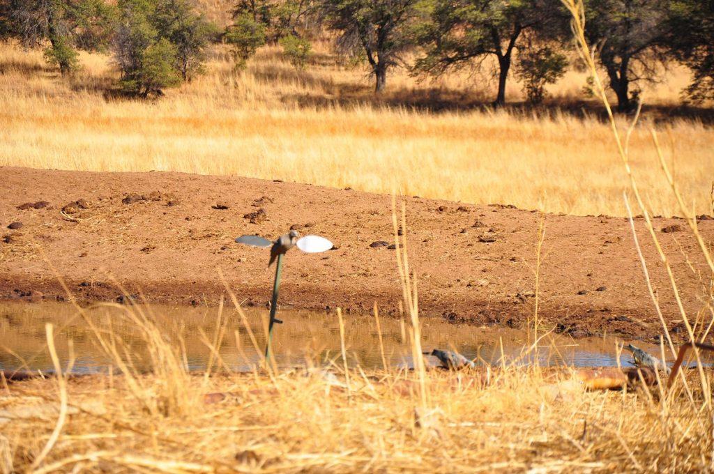 Dove Hunting in Arizona