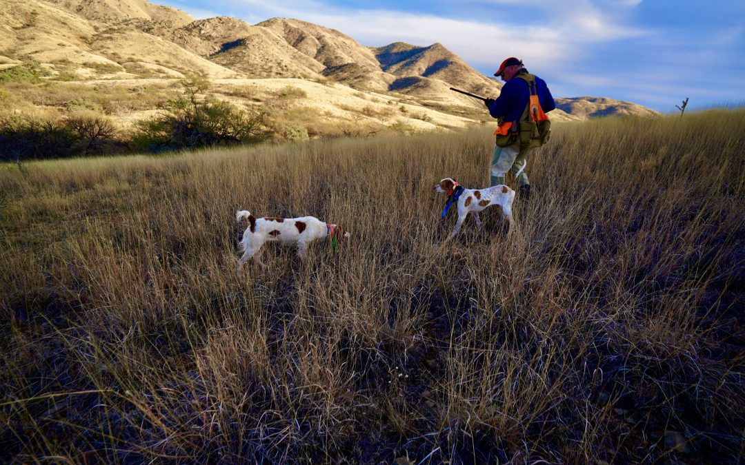 2020/21 Arizona Quail Hunting Forecast