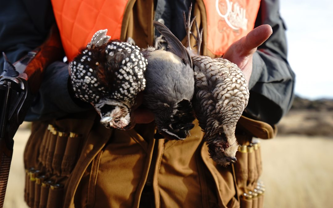 Mearns Quail Hunting Video With Mark Peterson World Trophy Adventures
