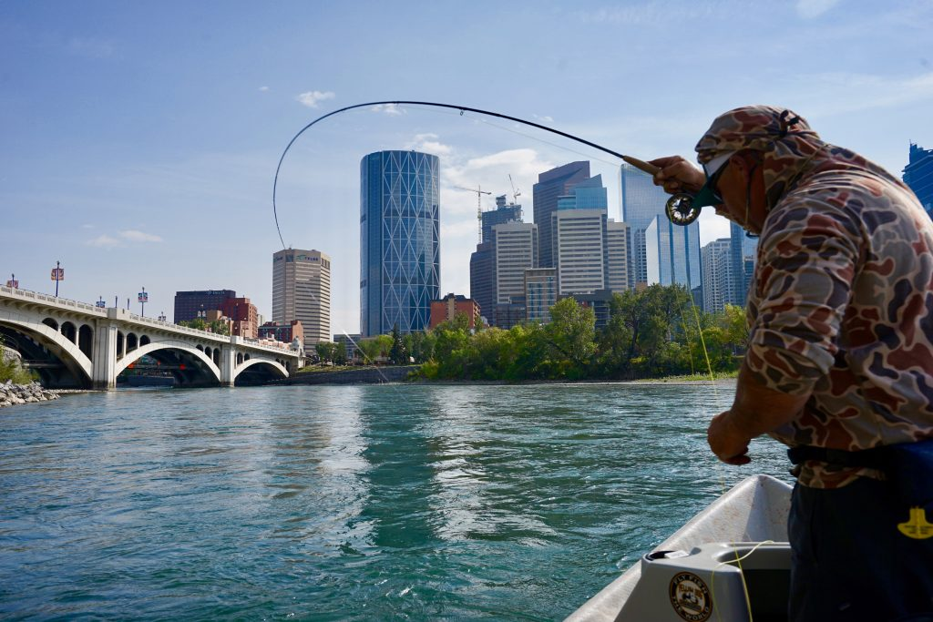 Fly-Fishing The Bow River in Downtown Calgary Alberta