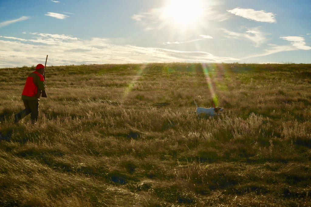 Saskatchewan Upland Bird Hunting