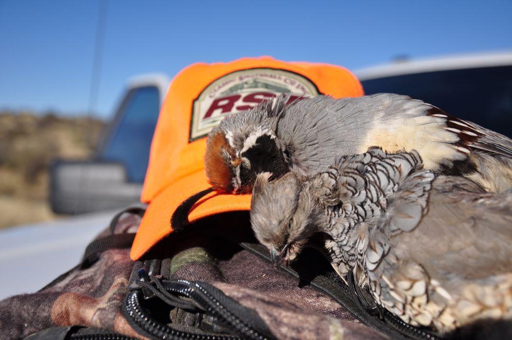 Arizona Quail Hunting Report