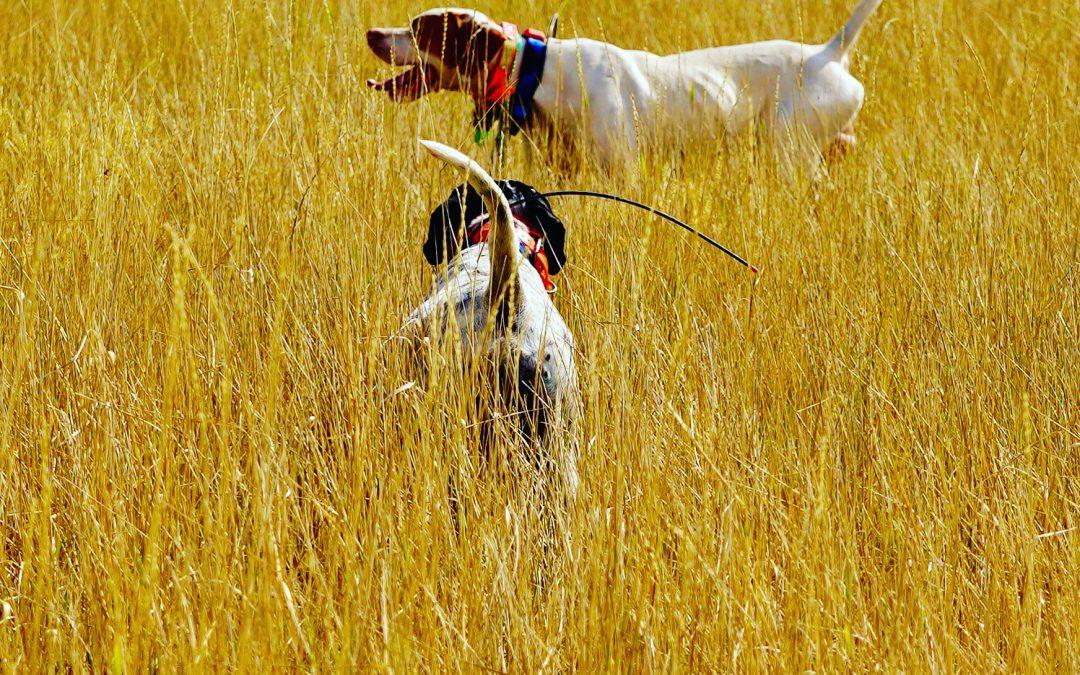 Montana Bird Hunting and Scenery Pics.