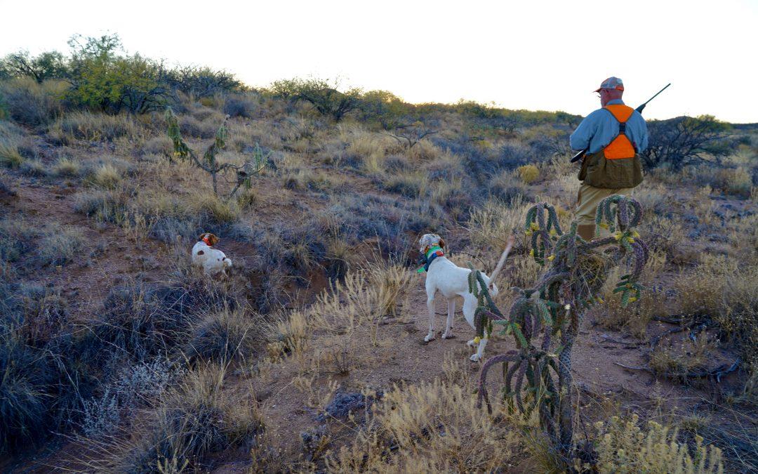 Arizona Quail Hunting Pictures