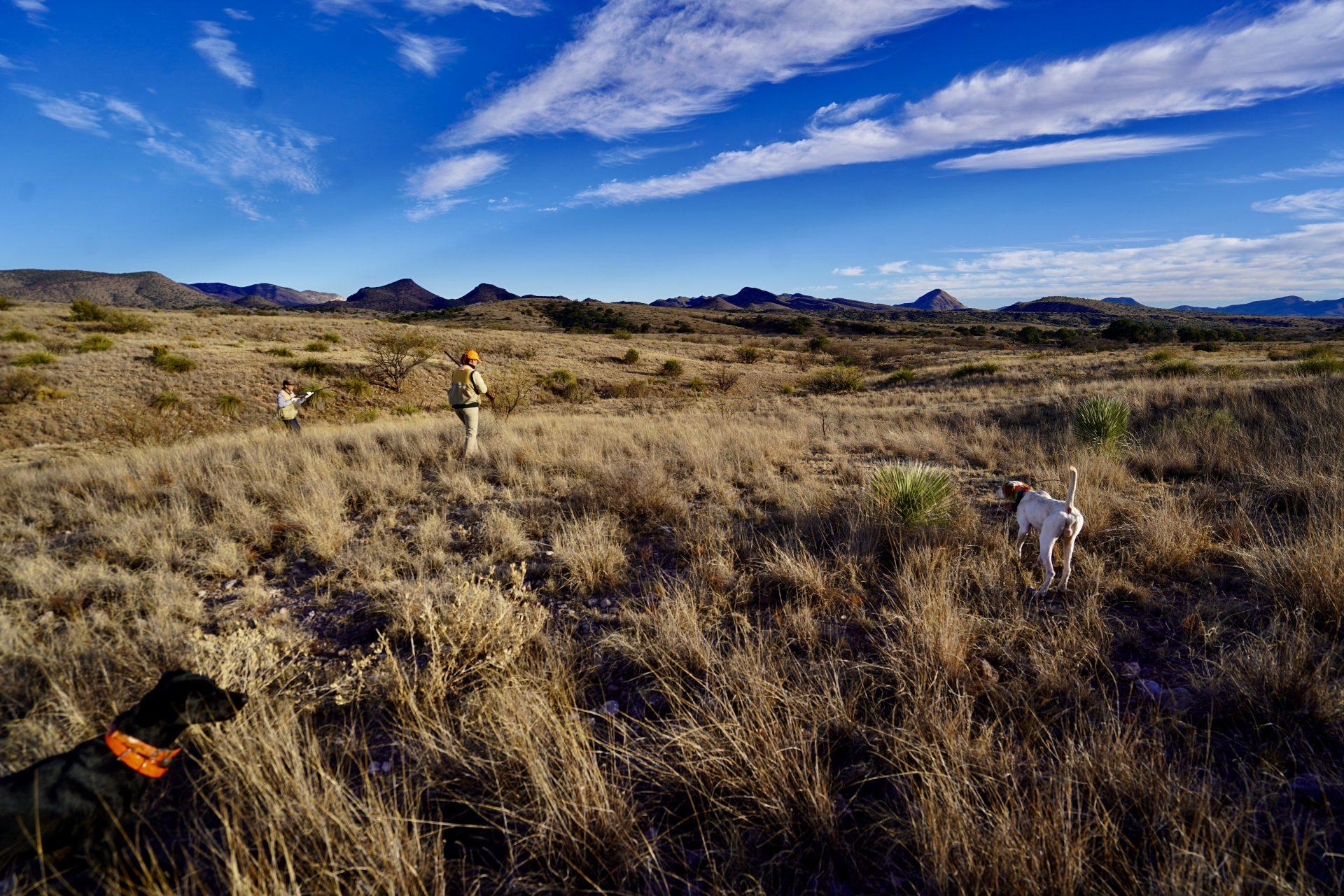 Arizona Quail Hunting